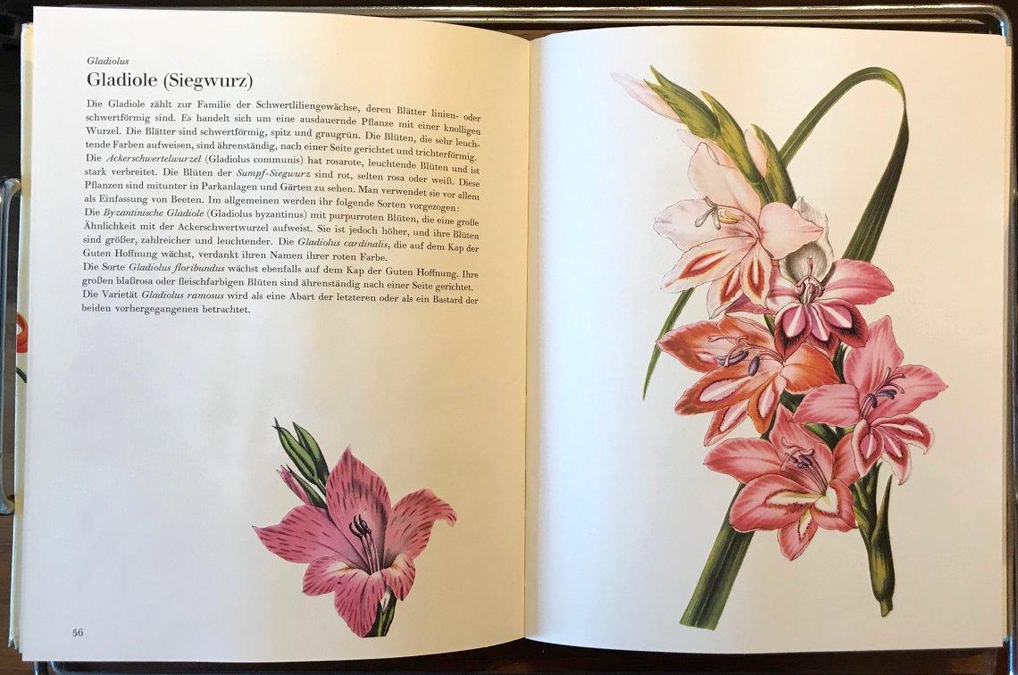 Gartenblumen_2