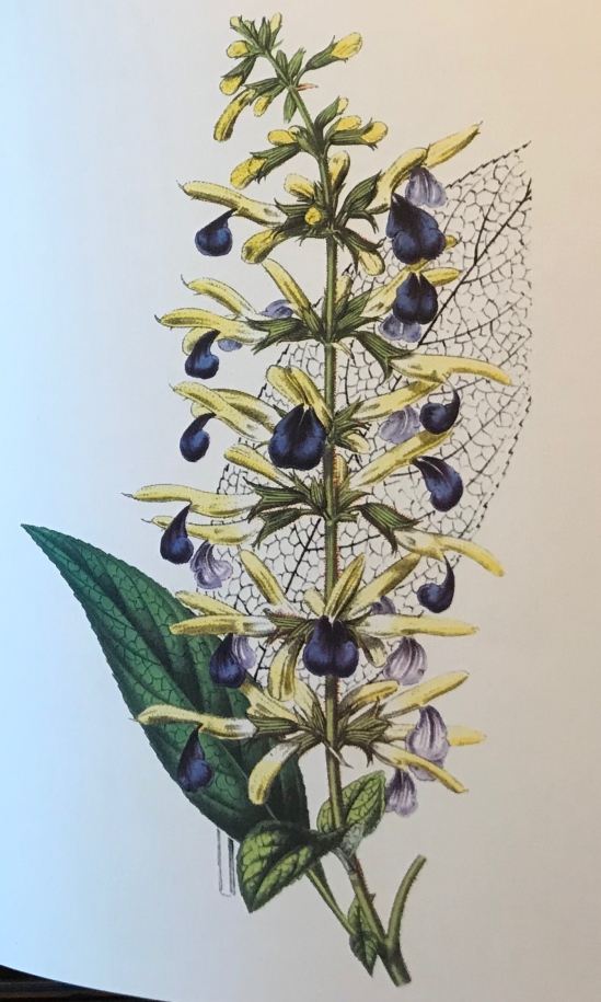 Gartenblumen_3