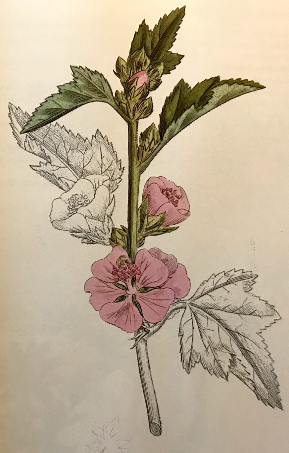Gartenblumen_4