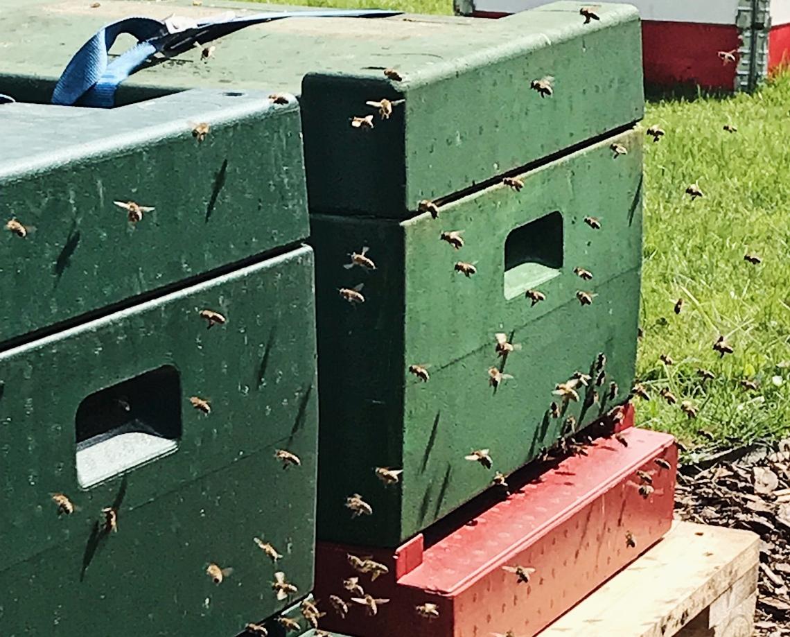 Bienenkaesten_Bienen_Bees